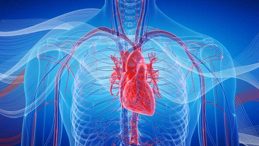 cardio-strength-vorschau
